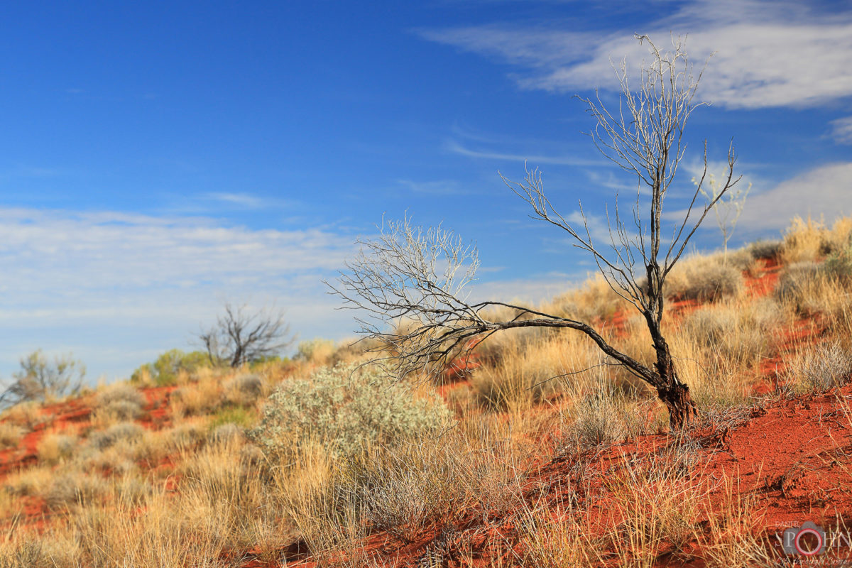 outback-australien-zentralaustralien